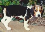 Meg Pup